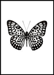 poster print with a black and white butterfly print