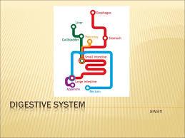 grade 8 digestive system