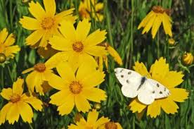 long blooming flowers for attracting butterflies and hummingbirds