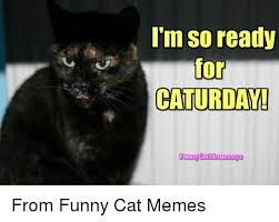 Caturday Meme - i m so ready for caturday unn from funny cat memes cats meme on