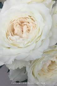 premium garden rose princess miyuki