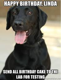 Black Lab Meme - black lab meme generator