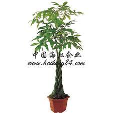 artificial plastic 1 5 2 5m indoor decor pachira tree
