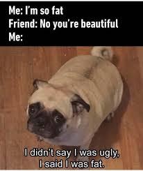Hehe Meme - hehe meme dog meme best of the funny meme