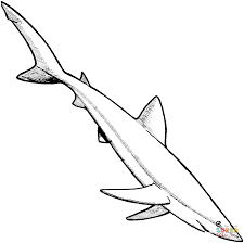 blue shark coloring free printable coloring pages