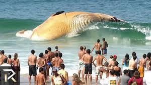 10 strangest ocean phenomena you won u0027t believe youtube