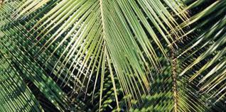 palm for palm sunday easy crafts for toddlers for palm sunday
