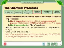 Where Do The Light Independent Reactions Occur Integrated Science M1 Photosynthesis Process