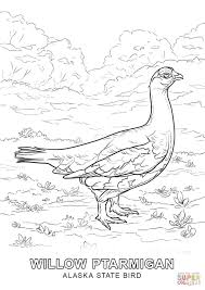 alaska bird coloring free printable coloring pages