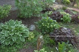 download shade gardening ideas garden design