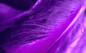 purple feather 1280x800 purple feather wallpaper and wallpapers