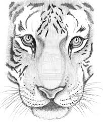 tiger sketch by schre d3dym3z jpg 900 1087 ooh this one looks