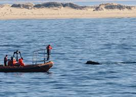 right whale survey field fresh page 3