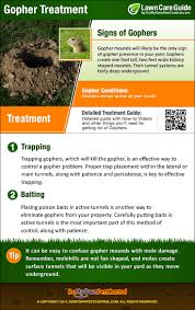 how to get rid of gophers control u0026 treatment