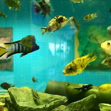 Home Aquarium Galway Tropaquaria Home Aquariums Salthill Aqautics