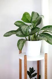plant stand amazon com indoor grow light tier stand sunlite
