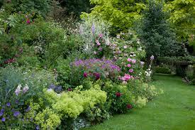fleurs vivaces rustiques 5 vivaces couvre sols à longue floraison qu u0027il faut avoir