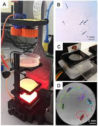 the u20ac100 lab a 3d printable open source platform for fluorescence