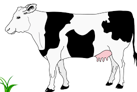 clipart of cow in black and white clipartxtras