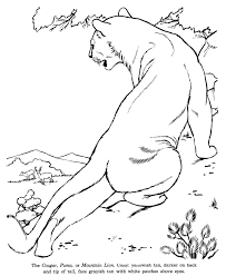 animal drawings coloring pages cougar animal identification
