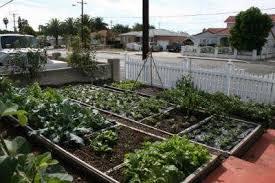 city uproots couple u0027s 17 year old front yard garden u2013 realfarmacy com