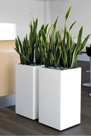 Square Planter Pots by Best 25 Snake Plant Ideas Only On Pinterest Palm House Plants
