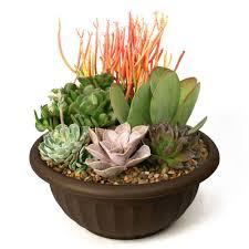 pots for succulents for sale terrariums pots u0026 planters the home depot