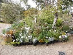 australian native plant nurseries bendigo tourism goldfields revegetation native nursery