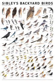 sibleys backyard birds poster from birdfeedersnmore com la