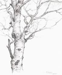 best 25 tree drawings ideas on trees drawing tutorial