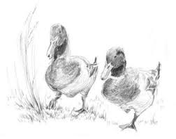 duck drawing etsy