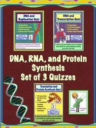 translation and protein synthesis quiz or review dna rna
