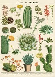cavallini wrap cavallini and co decorative wrap succulents