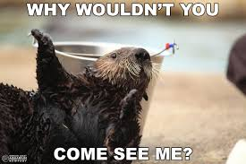 Sea Otter Meme - schuster the southern sea otter oregon coast aquarium memes