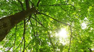 intensive light in early park intensive green leaves of