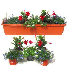 balkon grã npflanzen balkonpflanzen set für balkonkästen 80 cm lang sommer pflanzen