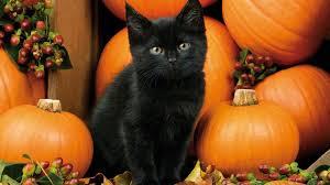 halloween kitten background 1920x1080 download 2880x1800 cat pumpkin