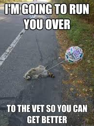 Meme Get Well Soon - i m going to run you over to the vet so you can get better get