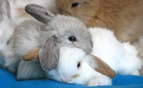 imagenes de animales y cosas animales usando a otros animales como almohadas el gato internauta