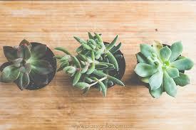 simple succulent terrariums plain vanilla mom