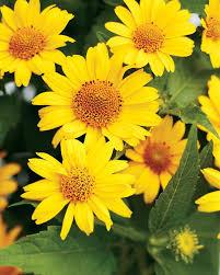 341 best sun garden images on pinterest flower gardening garden