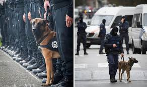 belgian shepherd diesel paris terror siege jesuischien police dog diesel given victoria