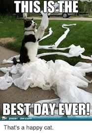 Best Day Ever Meme - this is the best day ever that s a happy cat meme on me me