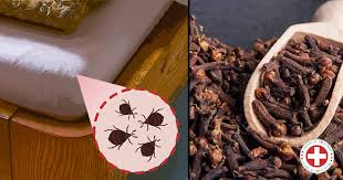 Home Remedies For Getting Rid Of Bed Bugs 11 Natural Remedies To Eliminate Bed Bugs For Good Recipes Included