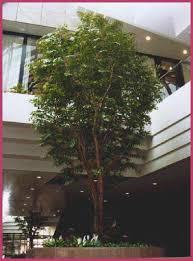 asianplants artificial trees ficus benjamina trees silk trees