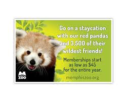 Zoo Lights Memphis Tn by 2015 Membership Ad By Laura Horn For The Memphis Zoo Laura Horn