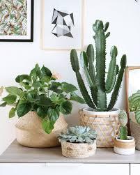 une plante dans une chambre plante verte chambre feng shui depolluante pour coucher dans la