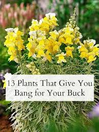 13 plants that give you bang for your buck shrub perennials and