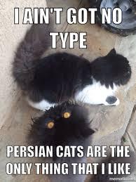 Persian Cat Meme - persian cat meme funny iaintgotnotype meme cats catmeme