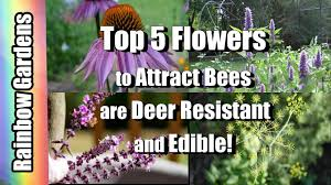 top 5 flowers in my gardens to attract bees they u0027re deer